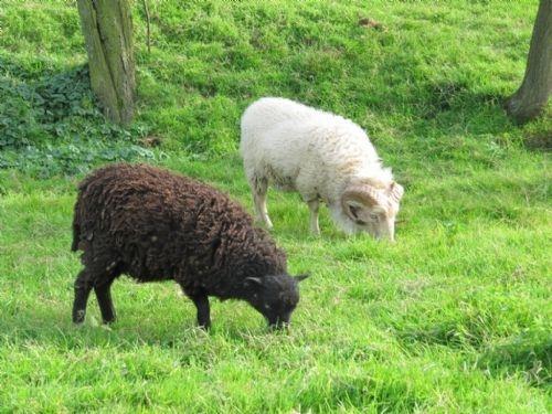 Krmíme ovečky na ekofarmě